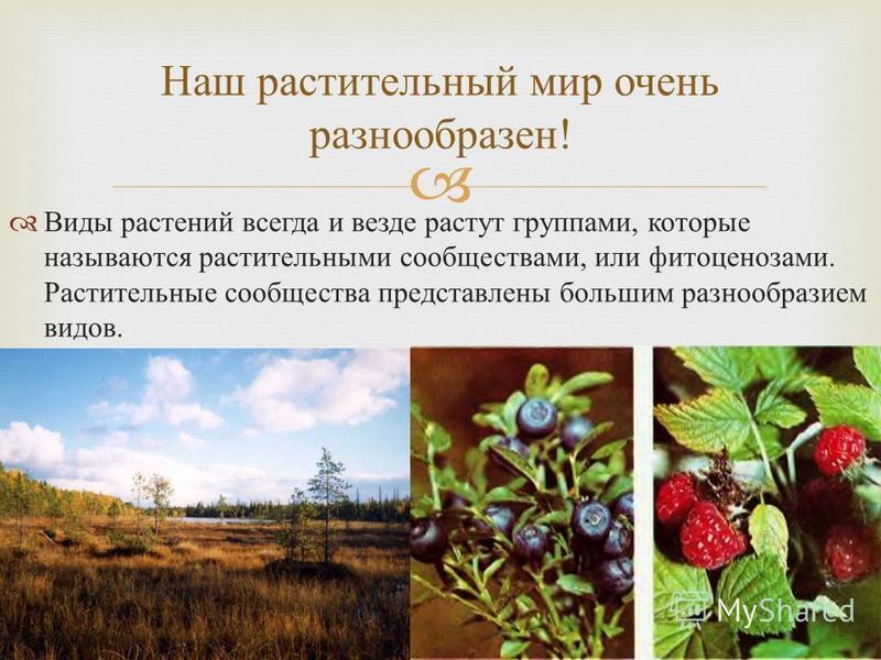 Виды растений всегда и везде растут группами, которые называются растительными сообществами, или фитоценозами. Растительные сообщества представлены большим разнообразием видов. Наш растительный мир очень разнообразен !