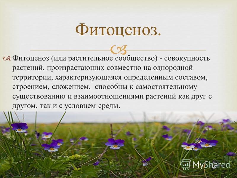 Фитоценоз ( или растительное сообщество ) - совокупность растений, произрастающих совместно на однородной территории, характеризующаяся определенным составом, строением, сложением, способны к самостоятельному существованию и взаимоотношениями растени