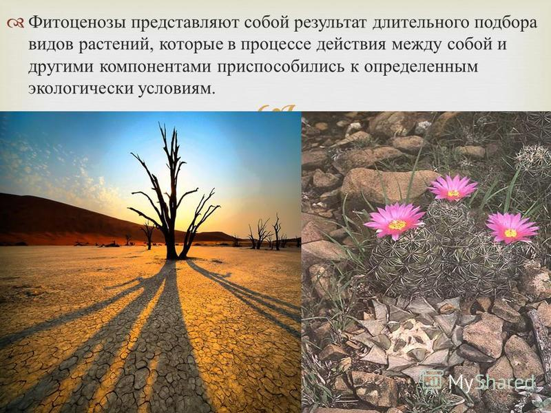 Фитоценозы представляют собой результат длительного подбора видов растений, которые в процессе действия между собой и другими компонентами приспособились к определенным экологически условиям.
