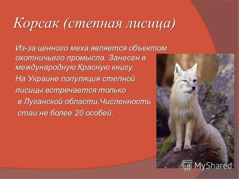 Корсак (степная лисица) Из-за ценного меха является объектом охотничьего промысла. Занесен в международную Красную книгу. На Украине популяция степной лисицы встречается только в Луганской области.Численность в Луганской области.Численность стаи не б