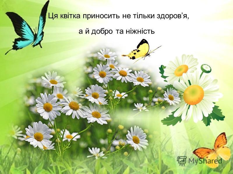 Ця квітка приносить не тільки здоровя, а й добро та ніжність