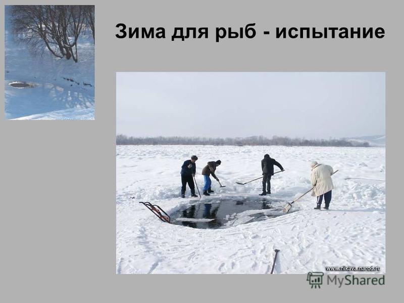 Зима для рыб - испытание