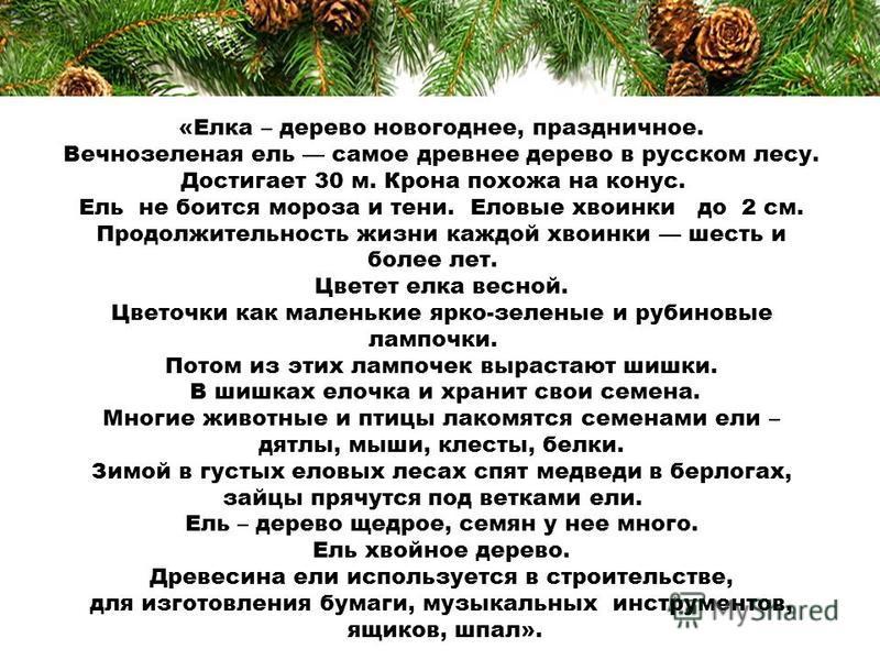 «Елка – дерево новогоднее, праздничное. Вечнозеленая ель самое древнее дерево в русском лесу. Достигает 30 м. Крона похожа на конус. Ель не боится мороза и тени. Еловые хвоинки до 2 см. Продолжительность жизни каждой хвоинки шесть и более лет. Цветет