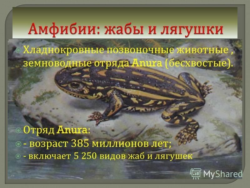 Хладнокровные позвоночные животные, земноводные отряда Anura ( бесхвостые ). Отряд Anura: - возраст 385 миллионов лет ; - включает 5 250 видов жаб и лягушек