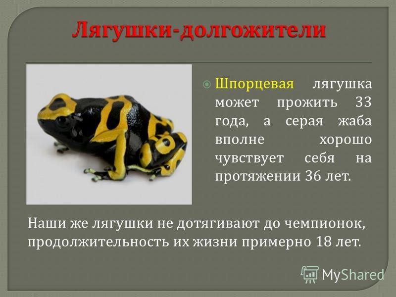 Шпорцевая лягушка может прожить 33 года, а серая жаба вполне хорошо чувствует себя на протяжении 36 лет. Наши же лягушки не дотягивают до чемпионок, продолжительность их жизни примерно 18 лет.