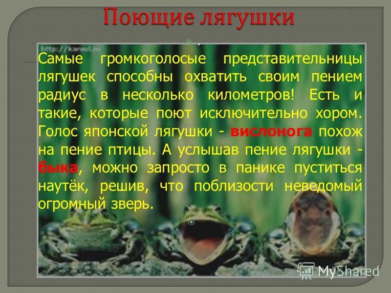 . Самые громкоголосые представительницы лягушек способны охватить своим пением радиус в несколько километров! Есть и такие, которые поют исключительно хором. Голос японской лягушки - веслонога похож на пение птицы. А услышав пение лягушки - быка, мож