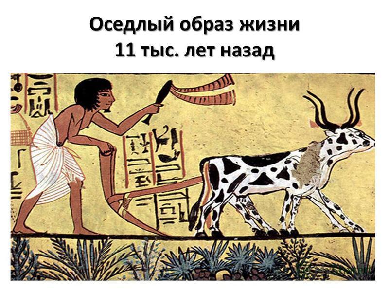Оседлый образ жизни 11 тыс. лет назад