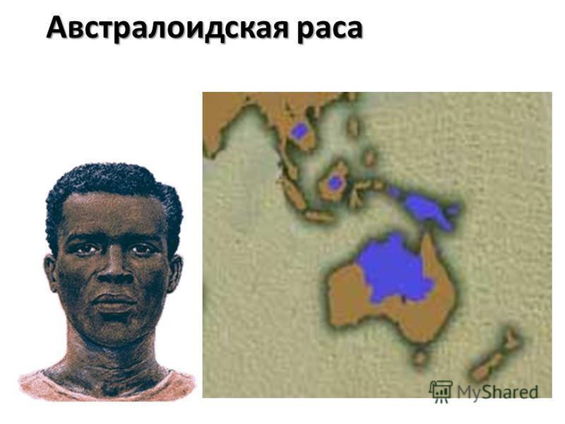 Австралоидская раса