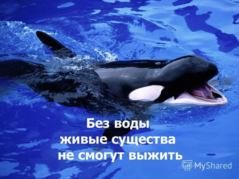 Без воды живые существа не смогут выжить