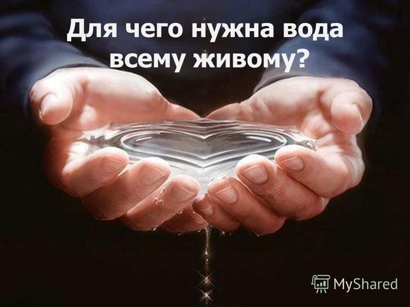 Для чего нужна вода всему живому?