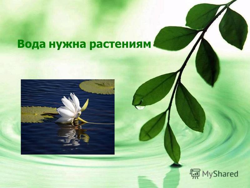 Вода нужна растениям