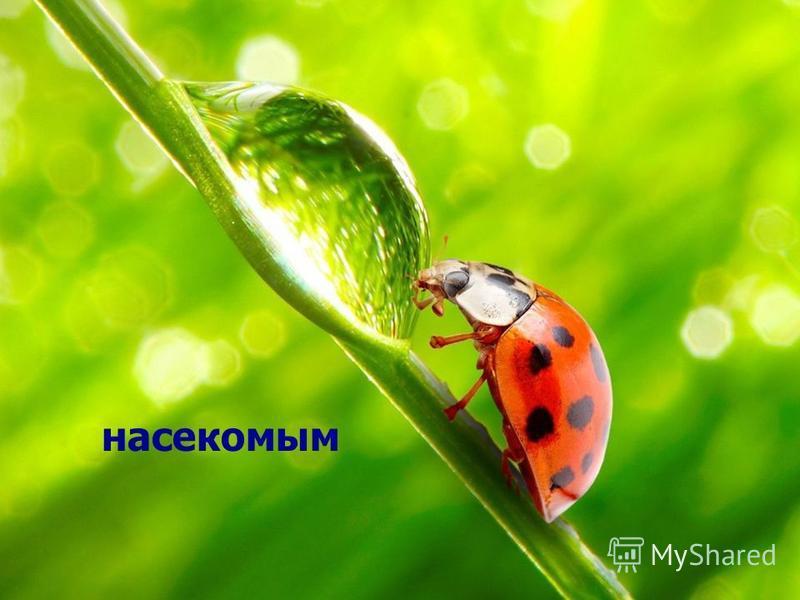 насекомым