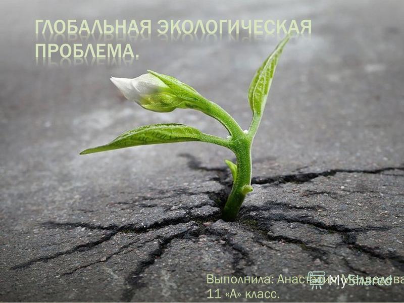 Выполнила: Анастасия Медведева, 11 «А» класс.