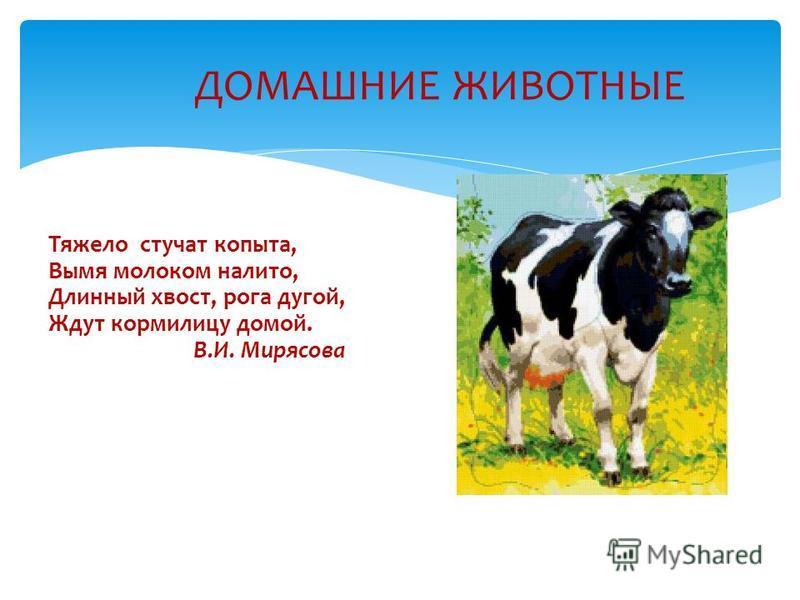Тяжело стучат копыта, Вымя молоком налито, Длинный хвост, рога дугой, Ждут кормилицу домой. В.И. Мирясова ДОМАШНИЕ ЖИВОТНЫЕ