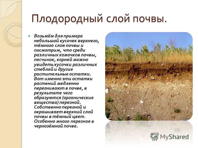 Плодородный слой почвы. Возьмём для примера небольшой кусочек верхнего, тёмного слоя почвы и посмотрим, что среди различных комочков почвы, песчинок, корней можно увидеть кусочки различных стеблей и другие растительные остатки. Вот именно эти остатки