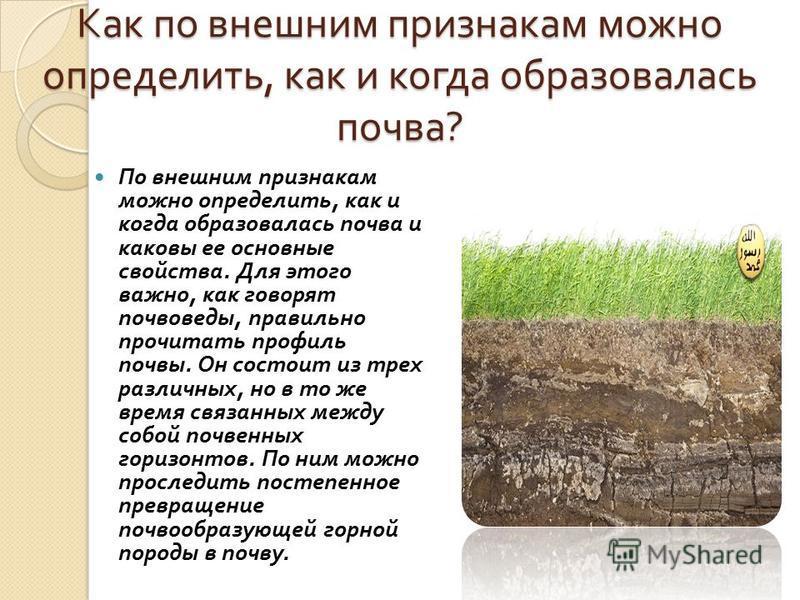 Как по внешним признакам можно определить, как и когда образовалась почва ? По внешним признакам можно определить, как и когда образовалась почва и каковы ее основные свойства. Для этого важно, как говорят почвоведы, правильно прочитать профиль почвы