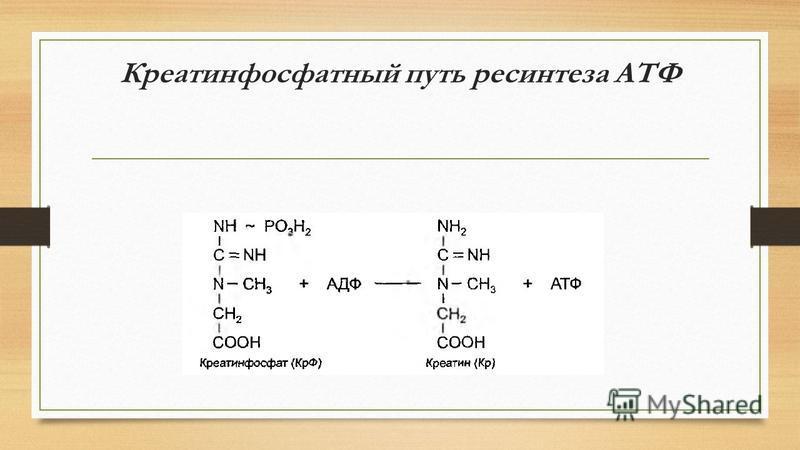 Креатинфосфатный путь ресинтеза АТФ