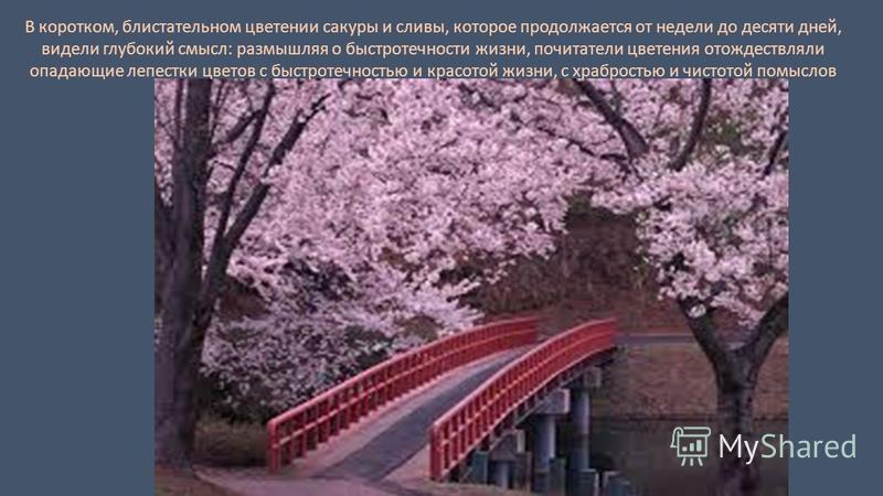 В коротком, блистательном цветении сакуры и сливы, которое продолжается от недели до десяти дней, видели глубокий смысл: размышляя о быстротечности жизни, почитатели цветения отождествляли опадающие лепестки цветов с быстротечностью и красотой жизни,