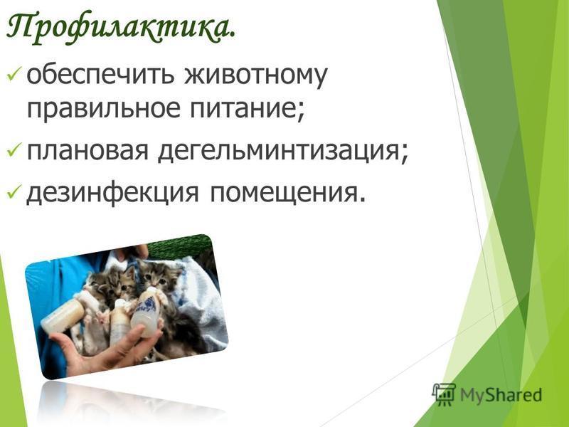 Профилактика. обеспечить животному правильное питание; плановая дегельминтизация; дезинфекция помещения.