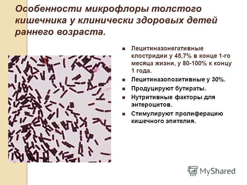 Особенности микрофлоры толстого кишечника у клинически здоровых детей раннего возраста. Лецитиназонегативные клостридии у 45,7% в конце 1-го месяца жизни, у 80-100% к концу 1 года. Лецитиназопозитивные у 30%. Продуцируют бутираты. Нутритивные факторы