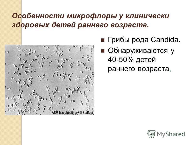 Особенности микрофлоры у клинически здоровых детей раннего возраста. Грибы рода Candida.. Обнаруживаются у 40-50% детей раннего возраста.