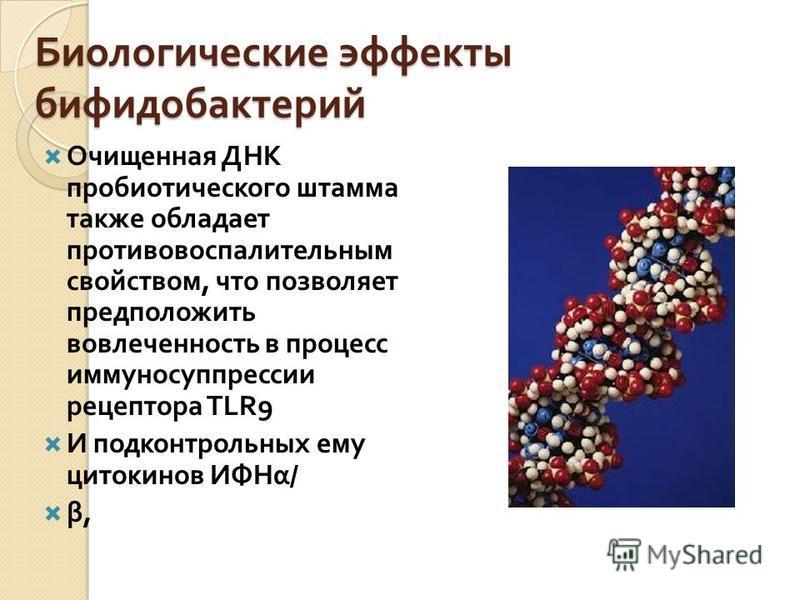 Биологические эффекты бифидобактерий Очищенная ДНК пробиотического штамма также обладает противовоспалительным свойством, что позволяет предположить вовлеченность в процесс иммуносуппрессии рецептора TLR9 И подконтрольных ему цитокинов ИФНα / β,