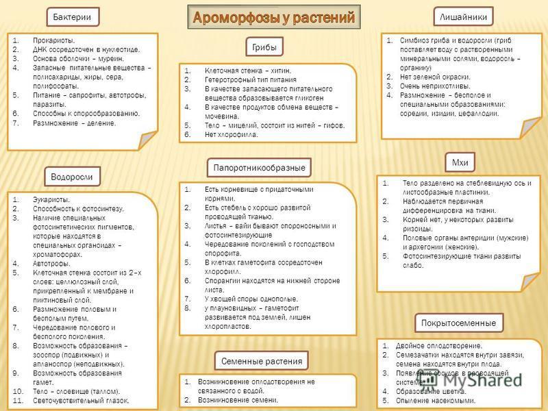 Бактерии 1.Прокариоты. 2. ДНК сосредоточен в нуклеотиде. 3. Основа оболочки – муреин. 4. Запасные питательные вещества – полисахариды, жиры, сера, полифосфаты. 5. Питание – сапрофиты, автотрофы, паразиты. 6. Способны к спорообразованию. 7. Размножени