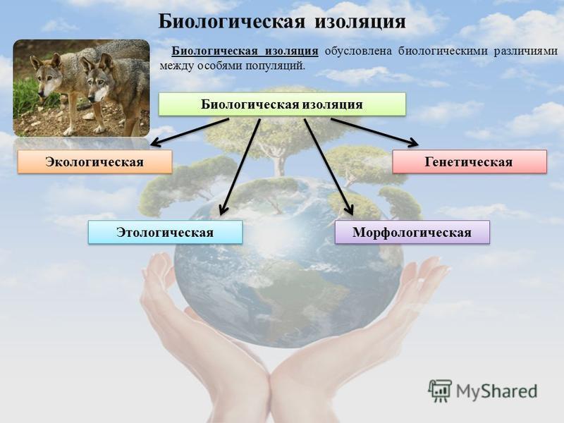 Биологическая изоляция Биологическая изоляция обусловлена биологическими различиями между особями популяций. Биологическая изоляция Экологическая Этологическая Генетическая Морфологическая