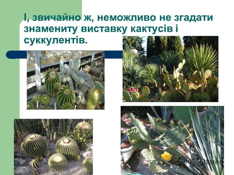І, звичайно ж, неможливо не згадати знамениту виставку кактусів і суккулентів.
