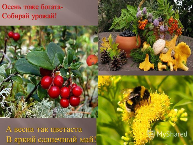 Осень тоже богата- Собирай урожай! А весна так цветаста А весна так цветаста В яркий солнечный май! В яркий солнечный май!
