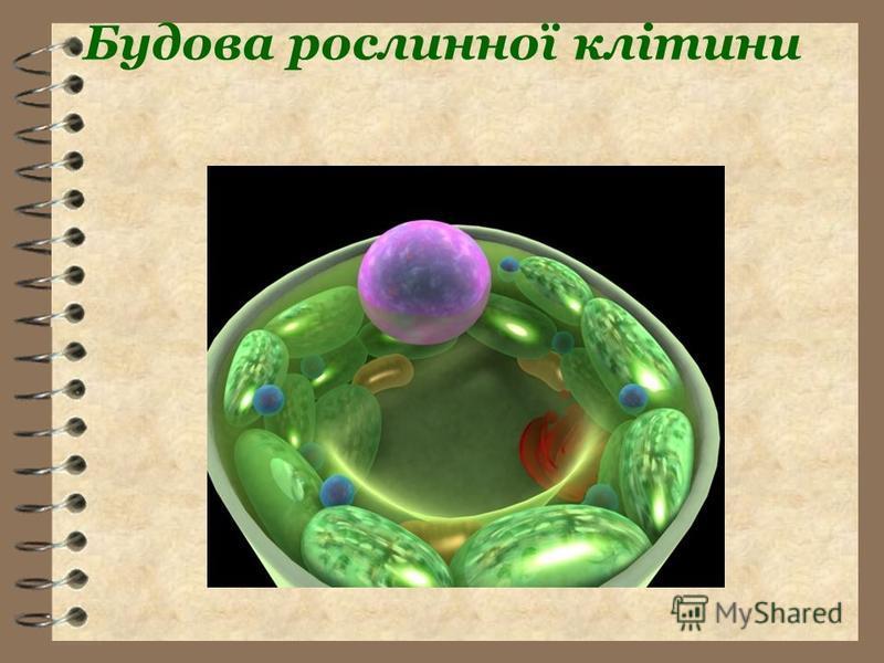 Будова рослинної клітини