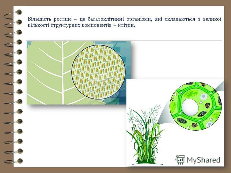 Більшість рослин – це багатоклітинні організми, які складаються з великої кількості структурних компонентів – клітин.