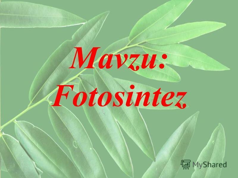 Mavzu: Fotosintez