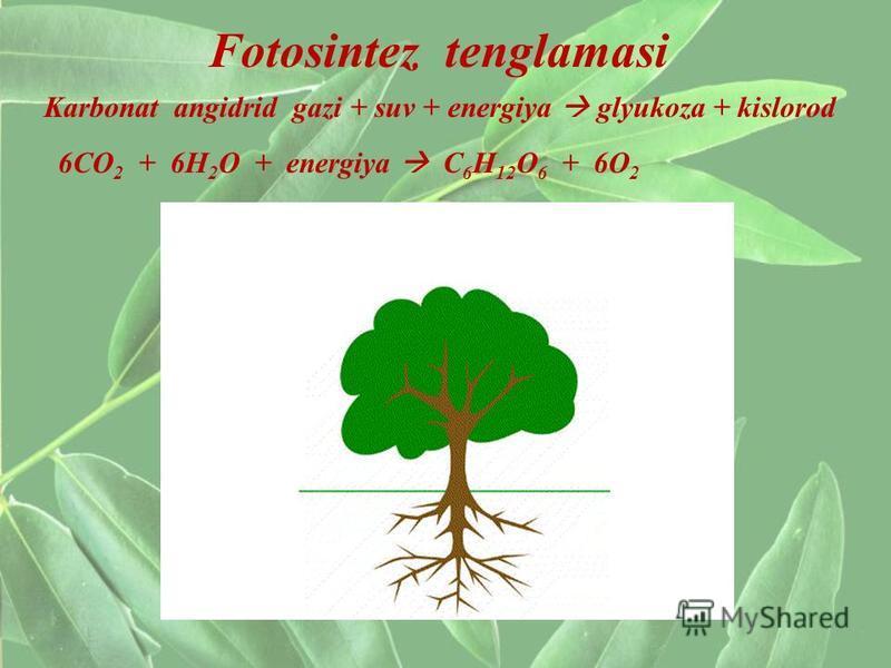 Fotosintez tenglamasi Karbonat angidrid gazi + suv + energiya glyukoza + kislorod 6CO 2 + 6H 2 O + energiya C 6 H 12 O 6 + 6O 2