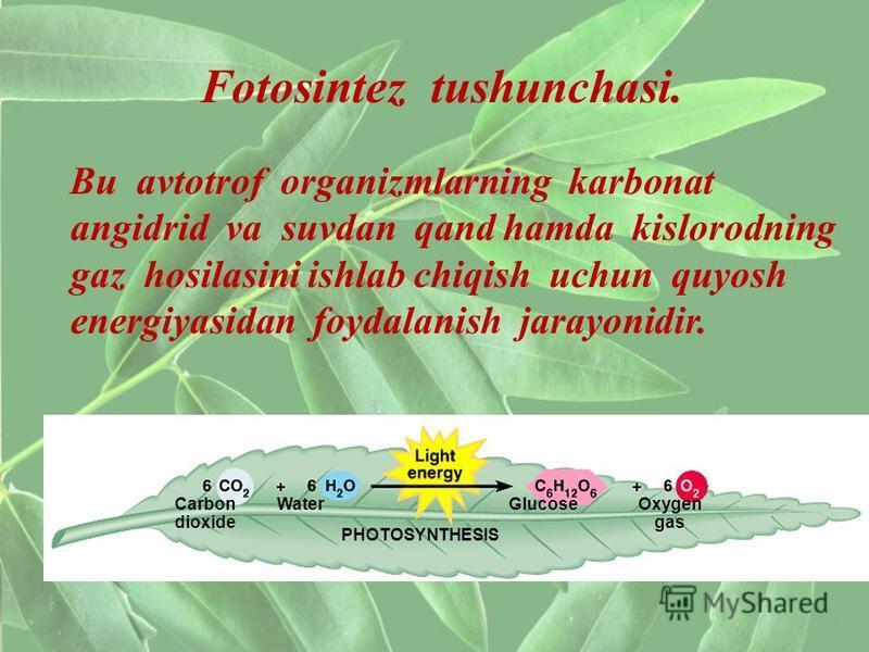 Bu avtotrof organizmlarning karbonat angidrid va suvdan qand hamda kislorodning gaz hosilasini ishlab chiqish uchun quyosh energiyasidan foydalanish jarayonidir. Fotosintez tushunchasi. Carbon dioxide WaterGlucoseOxygen gas PHOTOSYNTHESIS