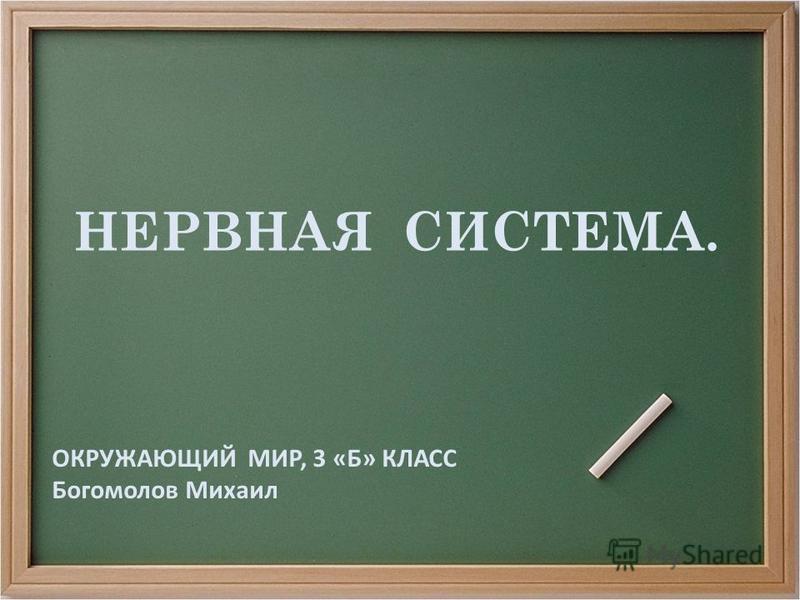 НЕРВНАЯ СИСТЕМА. ОКРУЖАЮЩИЙ МИР, 3 «Б» КЛАСС Богомолов Михаил