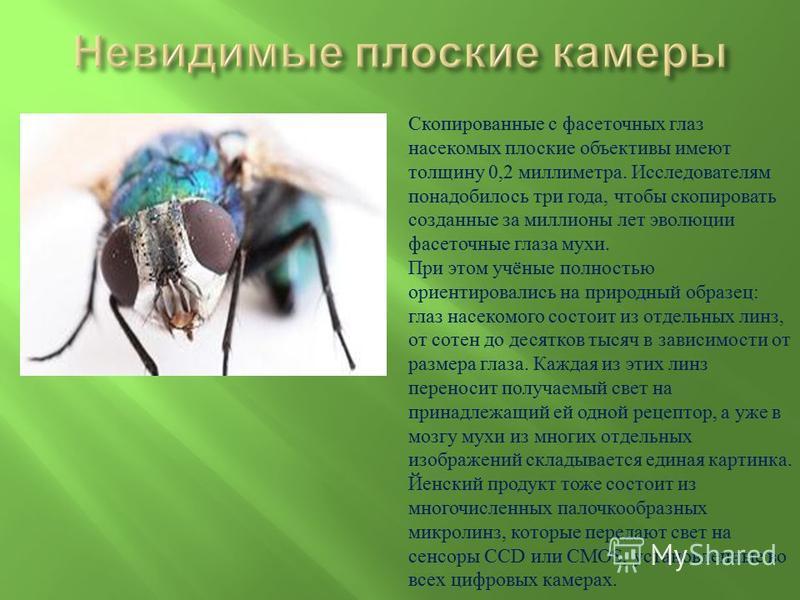 Скопированные с фасеточных глаз насекомых плоские объективы имеют толщину 0,2 миллиметра. Исследователям понадобилось три года, чтобы скопировать созданные за миллионы лет эволюции фасеточные глаза мухи. При этом учёные полностью ориентировались на п