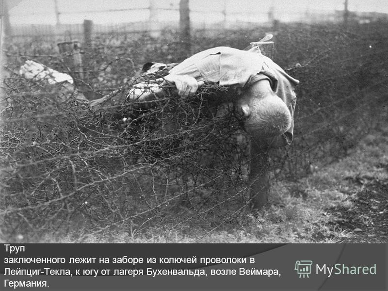 Труп заключенного лежит на заборе из колючей проволоки в Лейпциг-Текла, к югу от лагеря Бухенвальда, возле Веймара, Германия.