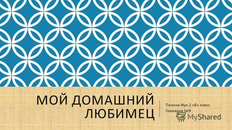 МОЙ ДОМАШНИЙ ЛЮБИМЕЦ Полина Жук 2 « Б » класс Гимназия 9