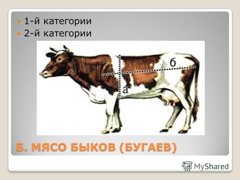Б. МЯСО БЫКОВ (БУГАЕВ) 1-й категории 2-й категории