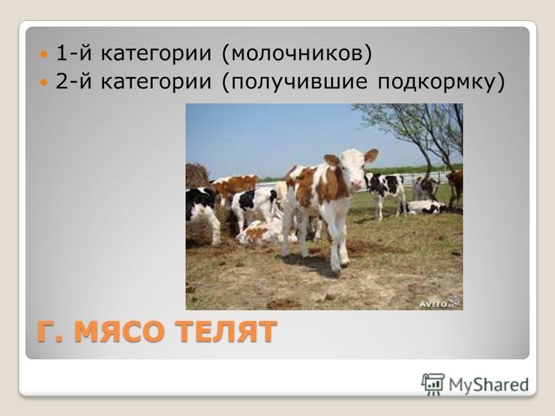 Г. МЯСО ТЕЛЯТ 1-й категории (молочников) 2-й категории (получившие подкормку)