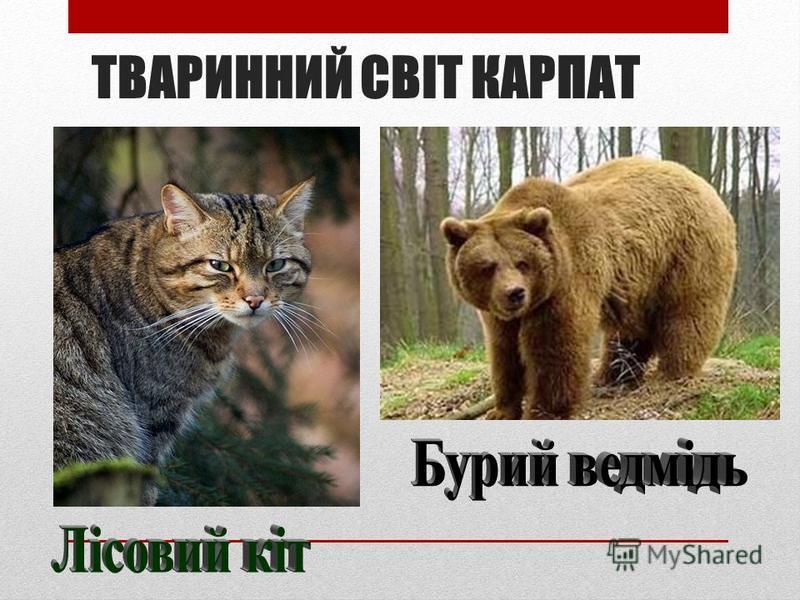 ТВАРИННИЙ СВІТ КАРПАТ