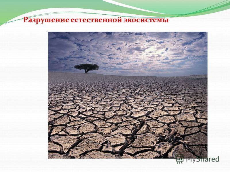 Разрушение естественной экосистемы