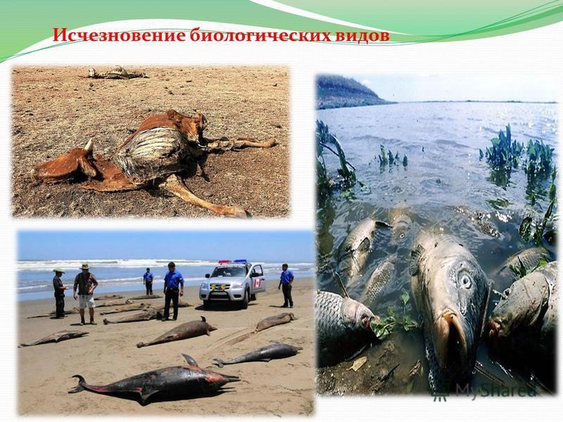 Исчезновение биологических видов