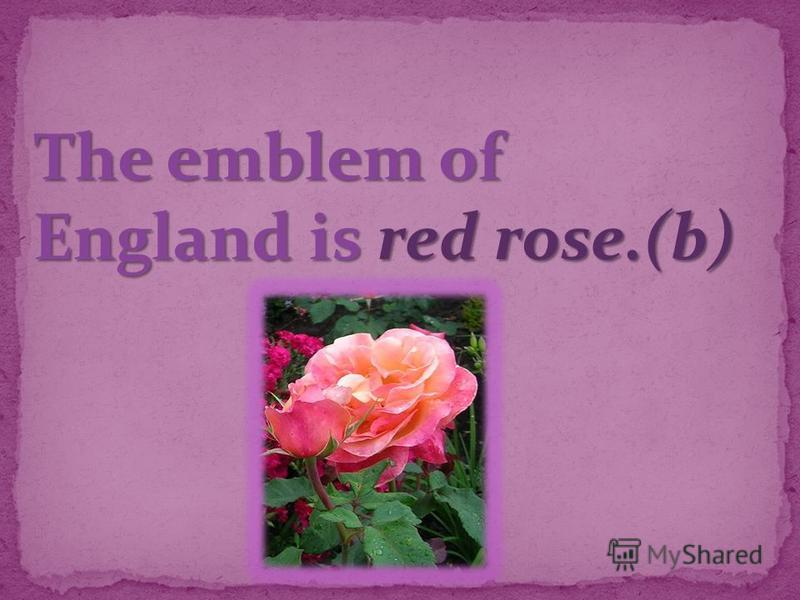 The emblem of England is red rose.(b)
