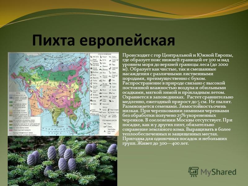 Пихта европейская Происходит с гор Центральной и Южной Европы, где образует пояс нижней границей от 300 м над уровнем моря до верхней границы леса (до 2000 м). Образует как чистые, так и смешанные насаждения с различными лиственными породами, преимущ