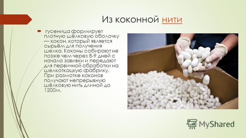Из коконной нити гусеница формирует плотную шёлковую оболочку кокон, который является сырьём для получения шелка. Коконы собирают не позже чем через 8-9 дней с начала завивки и передают для первичной обработки на шелкоткацкую фабрику. При размотке ко