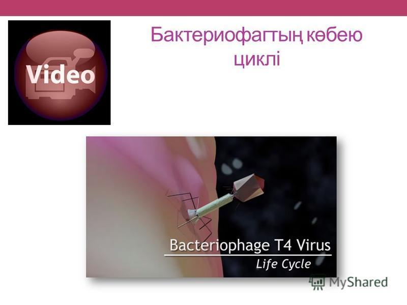Бактериофагтың көбею циклі