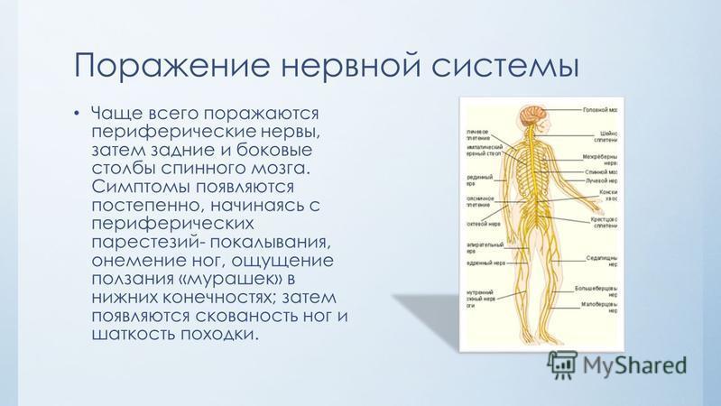 Поражение нервной системы Чаще всего поражаются периферические нервы, затем задние и боковые столбы спинного мозга. Симптомы появляются постепенно, начинаясь с периферических парестезий- покалывания, онемение ног, ощущение ползания «мурашек» в нижних