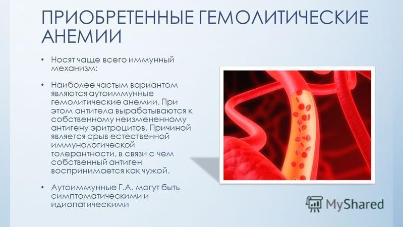 ПРИОБРЕТЕННЫЕ ГЕМОЛИТИЧЕСКИЕ АНЕМИИ Носят чаще всего иммунный механизм: Наиболее частым вариантом являются аутоиммунные гемолитические анемии. При этом антитела вырабатываются к собственному неизмененному антигену эритроцитов. Причиной является срыв